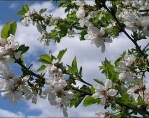 Стихи про весну для школьников