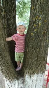 в деревьях