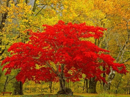 Стихи про октябрь