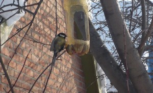 как сделать кормушку для птиц из бутылки