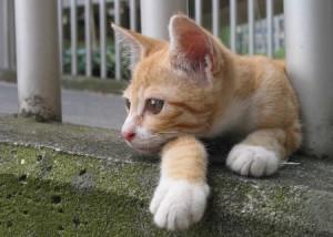 загадки о кошке