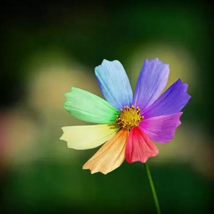 загадки по сказкам. Цветик семицветик