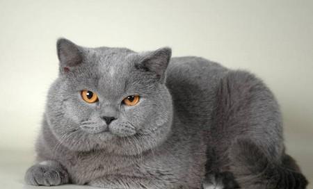 загадки прикольные про кота