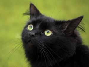 загадки для детей 4 лет про кота