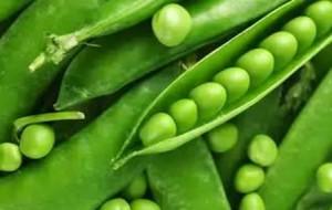 загадки про овощи. горох