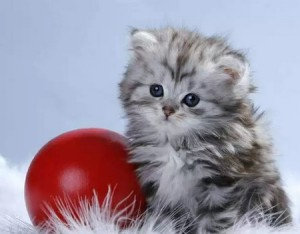 загадки про кошек