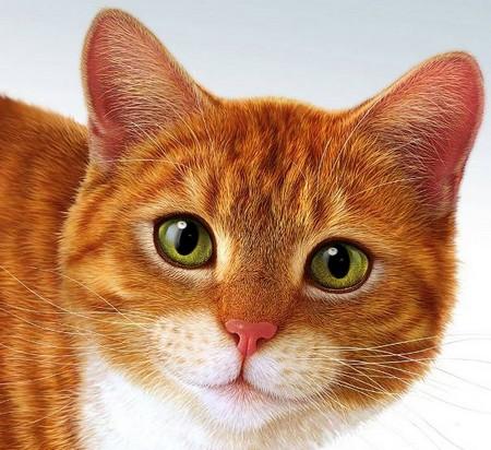 загадки русские народные про кошку