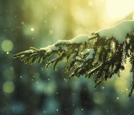 стихи про зиму
