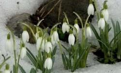 67 загадок по весну – лучшая примета скорого тепла