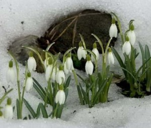 загадки про весну подснежники