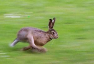 Зайца ноги спасают. Поговорки о природе