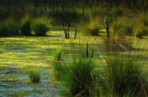 В болоте тихо, да жить там не лихо.
