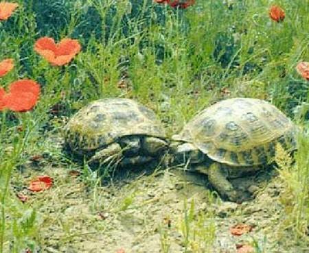 Черепахи - не самые медленные животные