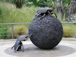 жук скарабей в зоопарке Лондона