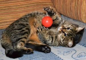 кошка с мячом