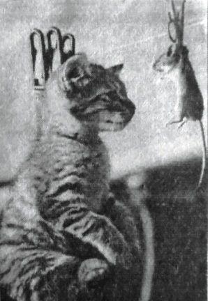 картинка про мышку с кошкой