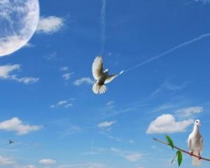 голуби над домом