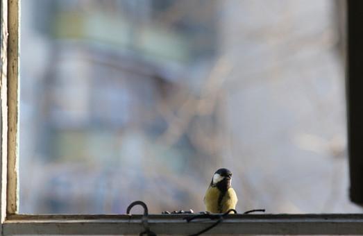 птичка на окошке