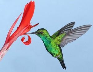 стихи про колибри