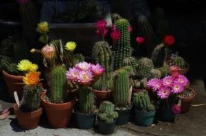 загадка про кактусы