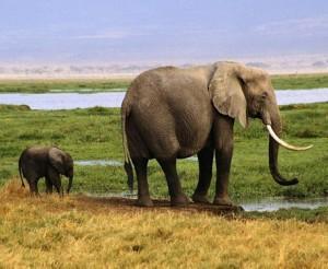 загадка про слона