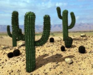 кактусы в пустынях