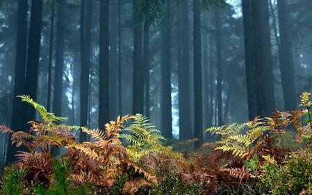 папортник в лесу