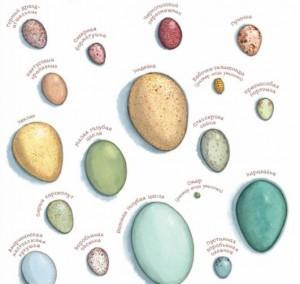 раскрасьте яйца разных птиц