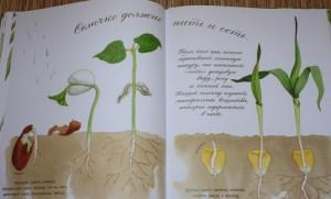 вырастите растение из семечки