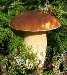 сказка про грибы