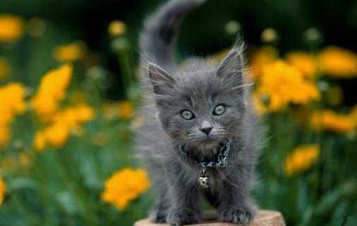 стихотворение про серого кота