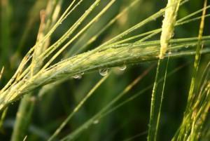 здравствуй дождик