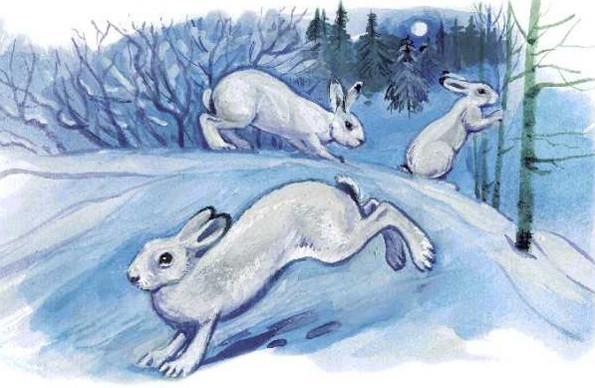 зайцы в зимнем лесу