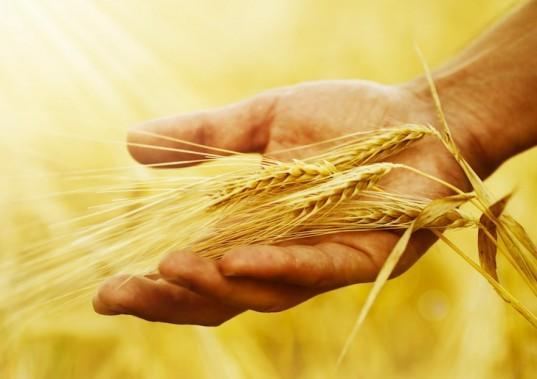 Зерна жизни
