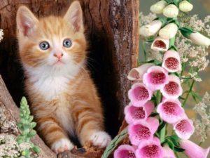 мечта котенка