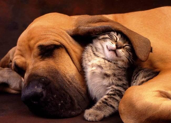 собака с котенком
