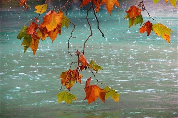 стих про осенний дождь
