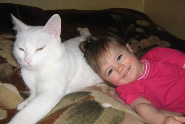 Кошки опасны для детей