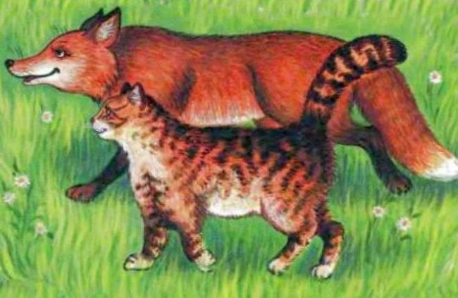 лиса и кот гуляют
